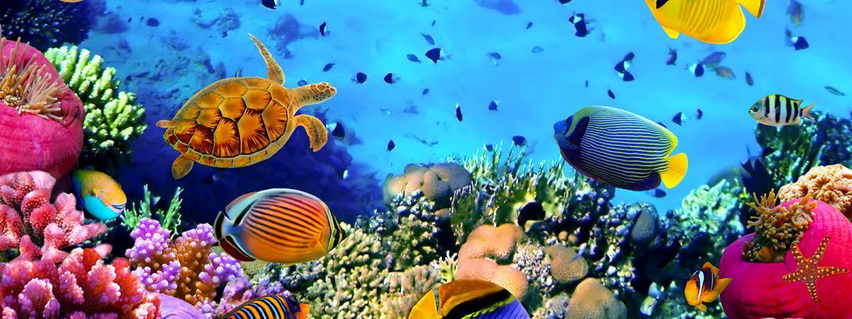 Vacanze al mare Africa