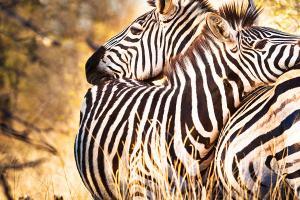 Parco Kruger Sudafrica