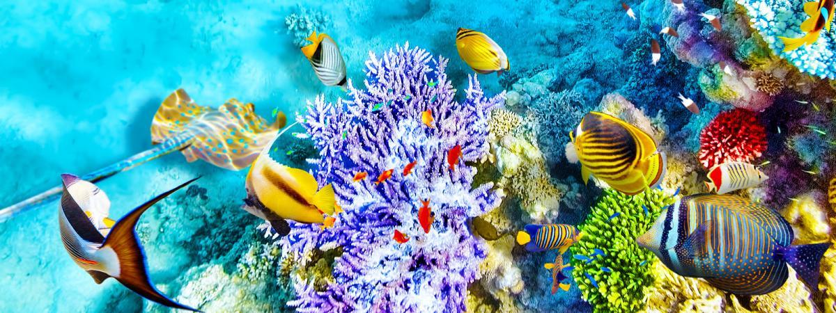 Parco marino di Malindi