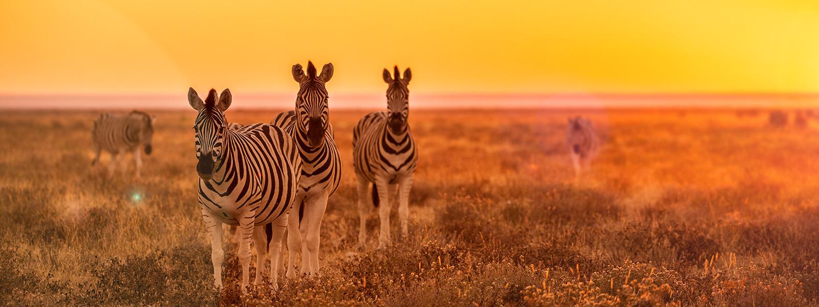 Viaggiare in Tanzania